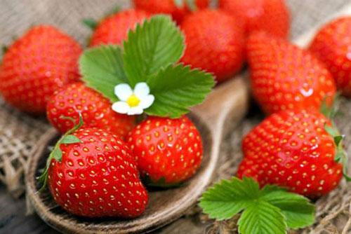 Những thực phẩm nên ăn khi bị viêm loét dạ dày