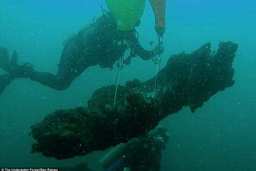 Bí ẩn khu rừng 60.000 năm tuổi được tìm thấy dưới đáy biển sâu