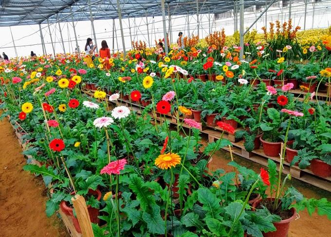 Hoa luôn thu hút du khách