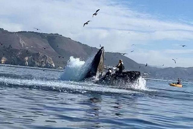 Cá voi lưng gù há miệng đớp mồi, suýt nuốt chửng 2 người chèo thuyền
