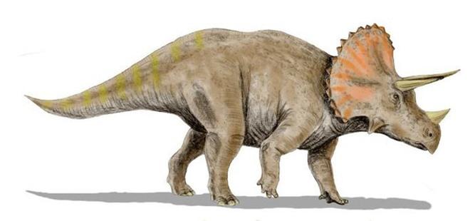 Khai quật hộp sọ khổng lồ dài 2 mét, nặng 1,3 tấn: Bí mật đáng sợ cách đây chục triệu năm hé lộ - Ảnh 3.