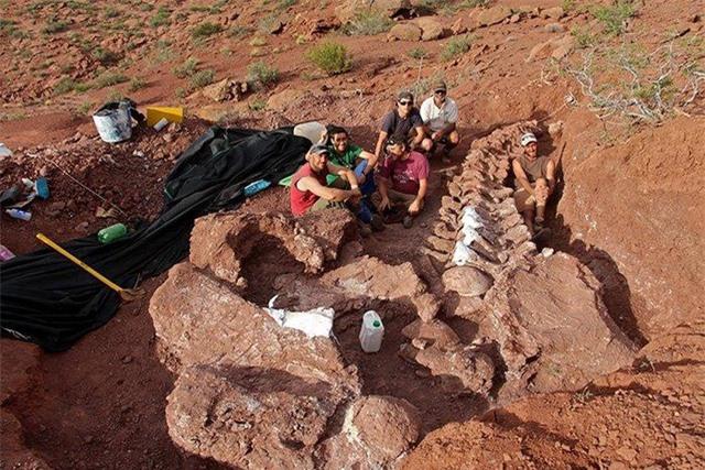 Phát hiện hóa thạch loài khủng long lớn nhất trên Trái đất? - 1