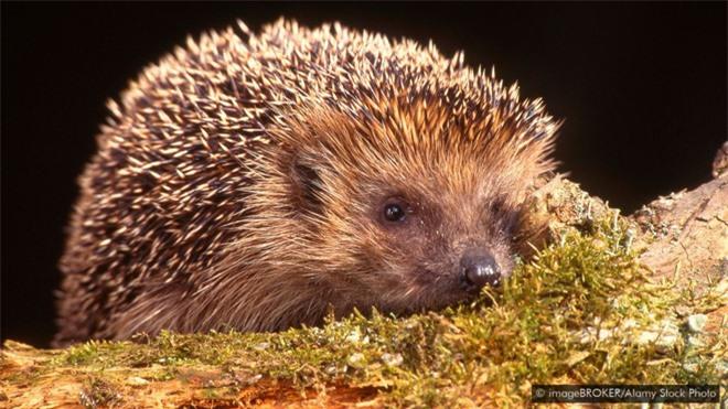 Tại sao một số loài động vật sở hữu nọc có độc tính cao đến mức chính chúng cũng không dùng được? - Ảnh 6.