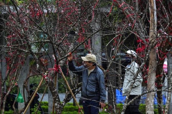 Truy xuất nguồn gốc cây đào: Làm sao để tránh thủ tục phức tạp, không phát sinh chi phí cho dân?