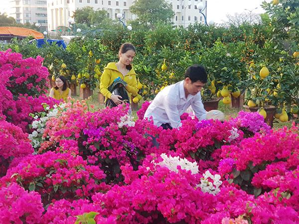 """Đà Nẵng: Chợ hoa Tết Tân Sửu 2021 """"lời ăn lỗ chịu"""", không xin hỗ trợ của ngân sách"""
