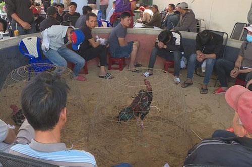 Đắk Lắk: Bắt giữ 47 đối tượng tại trường gà trá hình cá cược bằng bia, thuốc lá