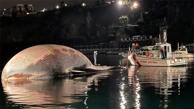 Cảnh sát biển bàng hoàng phát hiện xác sinh vật khổng lồ nhất từ trước đến nay nặng 70 tấn dạt vào bờ, câu chuyện phía sau gây nhói lòng - Ảnh 2.