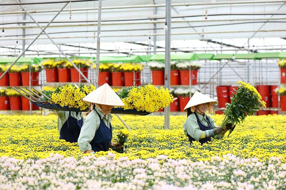 Hiện nay, nông sản Lâm Đồng được xuất khẩu đi hơn 40 nước trên thế giới, trong đó có những thị trường khó tính như Nhật, Châu Âu, Mỹ.