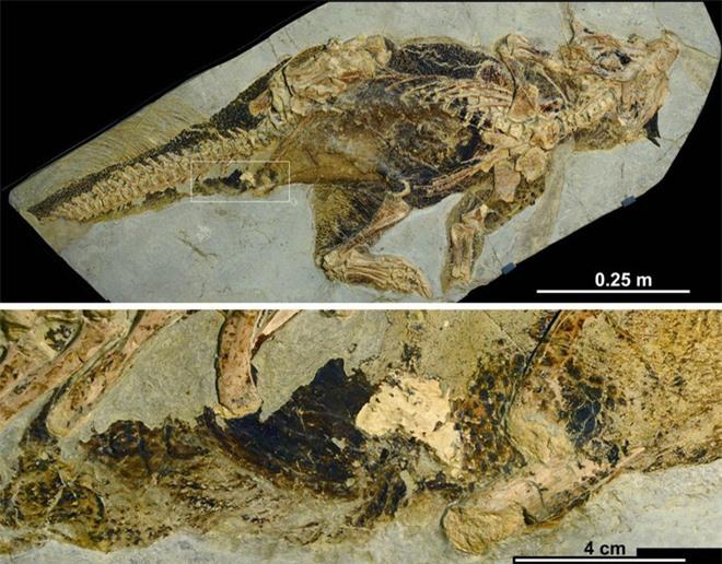 Cuối cùng thì giới cổ sinh vật học cũng đã tìm ra được cần tăng dân số của khủng long - Ảnh 2.