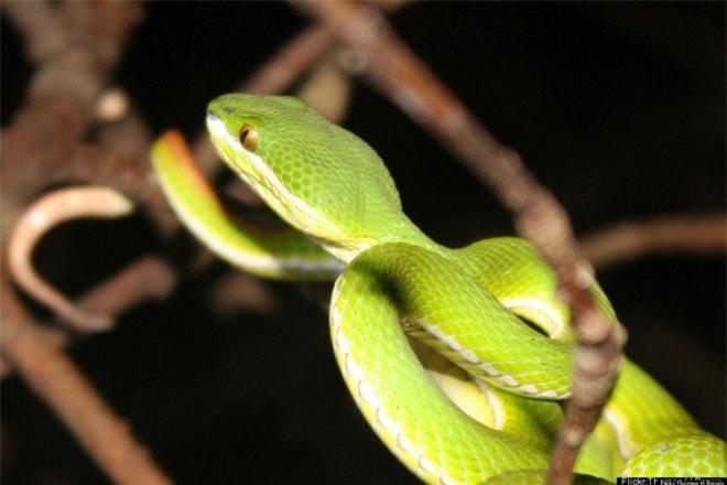 Đảo rắn là 1 trong nhiều khám phá thế giới đáng sợ nhất