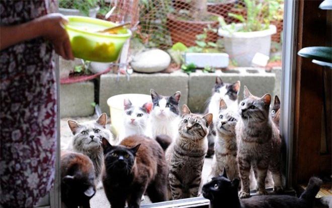 Hòn đảo này hấp dẫn những người yêu mèo từ khắp nơi trên thế giới