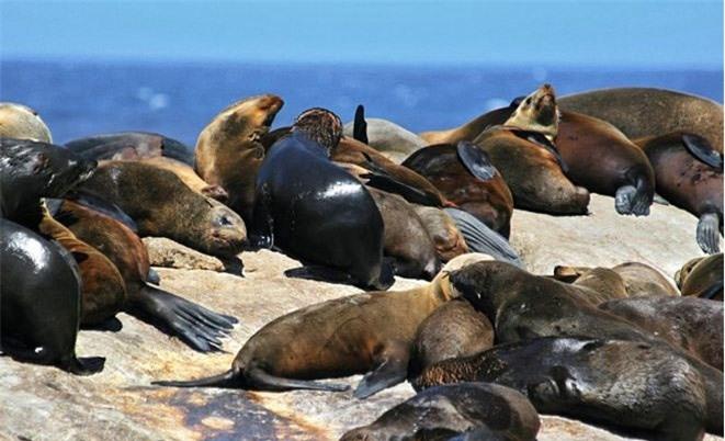 Những con hải cẩu có thể sống thoải mái ở trên hòn đảo nhỏ bé này