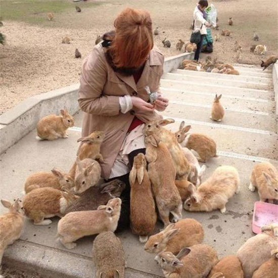 Loài thỏ ở đảo này là tàn dư của thế chiến thứ 2