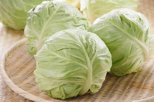 """Thấy bắp cải có 1 trong 3 dấu hiệu này thì tuyệt đối không ăn kẻo ''ngậm"""" đầy thuốc sâu"""