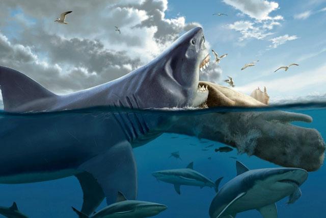Quái vật Megalodon đạt kích cỡ khổng lồ bằng cách ăn thịt anh em ngay từ trong bụng mẹ