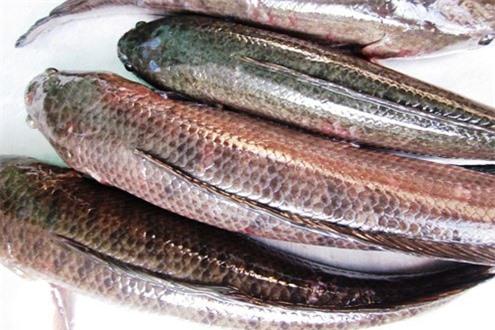 Cách chọn cá ngon, không bị ươn