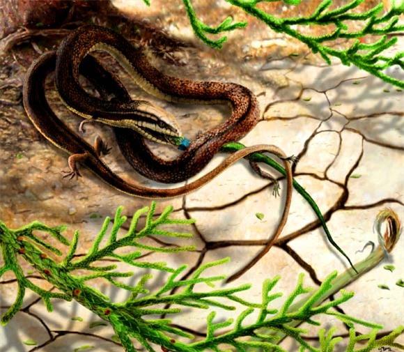 Mô phỏng lại hình ảnh loài rắn 4 chân bắt kỳ nhông. Ảnh Sci-news