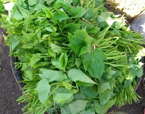 Loại rau 'quê mùa' thường bị bỏ đi nhưng lại rất tốt và bổ gấp 5-10 lần củ khoai lang, còn ngừa được ung thư - Ảnh 1