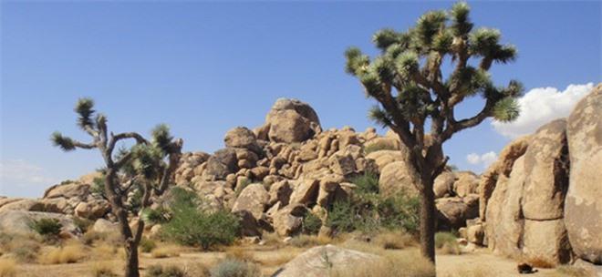 Kỳ bí những hộp sọ khổng lồ ở thung lũng Chết ảnh 1