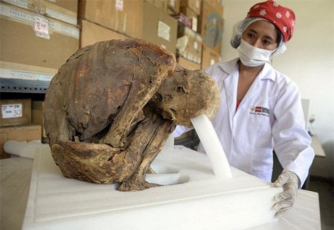 Các nhà khảo cổ khai quật được tổng cộng 26 ngôi mộ, trong đó có cả các xác ướp người lớn ngồi bó gối