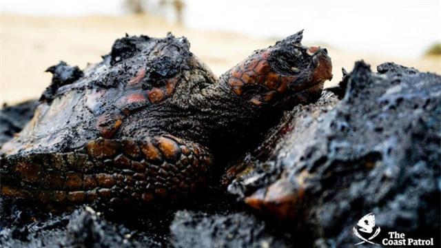 Xác cá voi, rùa biển đen sì bởi hàng chục tấn hắc ín trôi nổi trên biển tại Israel - Ảnh 3.