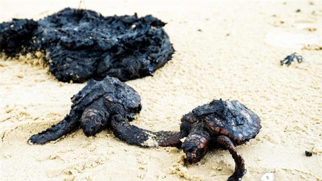 Xác cá voi, rùa biển đen sì bởi hàng chục tấn hắc ín trôi nổi trên biển tại Israel - Ảnh 4.