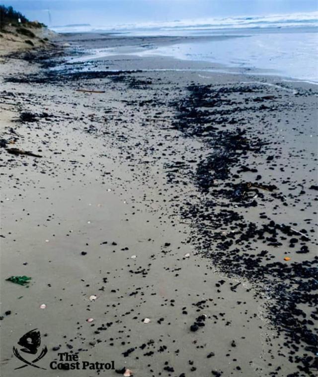 Xác cá voi, rùa biển đen sì bởi hàng chục tấn hắc ín trôi nổi trên biển tại Israel - Ảnh 5.