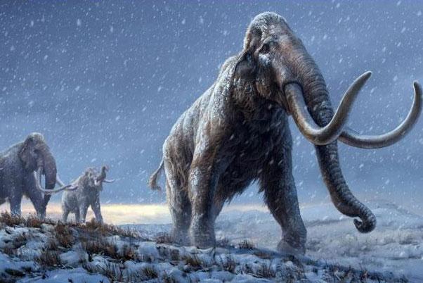Hình minh họa mô tả sự tái tạo của những con voi ma mút thảo nguyên trước loài voi ma mút lông xoăn, dựa trên kiến thức di truyền mà chúng ta hiện có từ loài voi ma mút Adycha. Nguồn: Beth Zaiken / CPG.