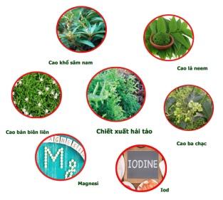 Hải tảo kết hợp với các vị thuốc quý giúp cải thiện tình trạng suy giáp hiệu quả.