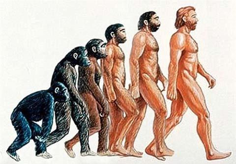 Loài người tách khỏi linh trưởng từ 30 triệu năm trước