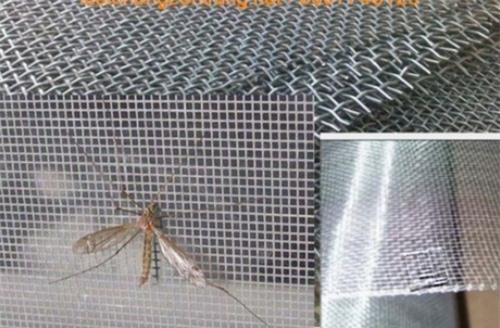 10 cách diệt đường xâm nhập của côn trùng vào nhà - 2