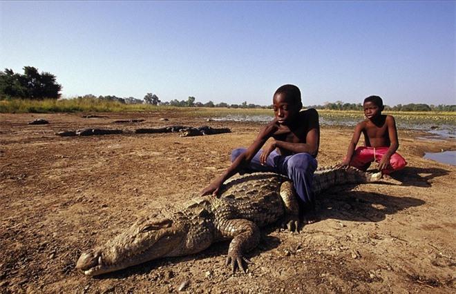 Người dân làng Bazoule, Burkina Faso, rất thân thiết với những con cá sấu đã sống ở đây từ hàng trăm năm. Người địa phương tôn sùng loài bò sát này vì họ tin rằng sự may mắn của các ngôi làng liên quan trực tiếp đến sự tồn tại của loài cá sấu. Những con cá sấu sông Nile có thể dài đến 6 mét khi trưởng thành, chúng sống bên cạnh dân làng. Người dân đã huấn luyện chúng để người lạ có thể đi bộ an toàn giữa các con cá sấu và thậm chí giữ đuôi chúng.
