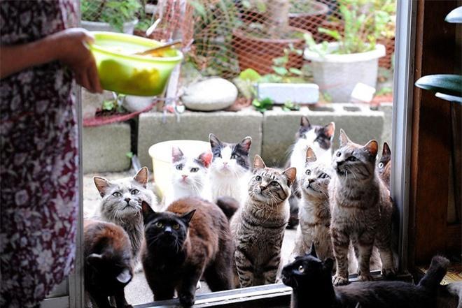 """""""Đảo mèo"""" Tashirojima ở Nhật Bản có số lượng mèo lớn hơn cả 100 người dân sinh sống trên đảo. Người dân trên đảo sinh sống chủ yếu dựa vào nghề đánh cá. Tuy nhiên, những con mèo lại có rất hữu ích trong ngành nuôi tằm để dệt lụa, vì chúng săn bắt những con chuột săn tằm. Người dân nuôi mèo cũng vì họ tin rằng chúng mang lại sức khỏe và may mắn."""