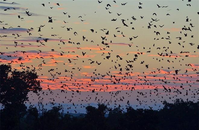 Bạn có thể chứng kiến đàn dơi đến hàng triệu con từ cuối tháng 10 đến tháng 12 tại các khu rừng ở vườn quốc gia Kasanka, Zambia. Loài dơi bay từ Cộng hòa dân chủ Congo đến khu rừng này mỗi năm để tìm kiếm thức ăn là trái cây rất dồi dào tại đây.