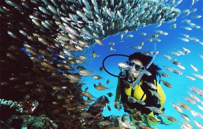 Rặng san hô Great Barrier tại Australia, một trong bảy kì quan của thiên nhiên, là nơi sinh sống của 1.500 loài cá nhiệt đới, 200 loài chim, 20 loài bò sát cũng như cá voi, cá heo, cá đuối, động vật thân mềm và bọt biển san hô. UNESCO đã công nhận khu bảo tồn biển này là di sản thế giới vào năm 1981.