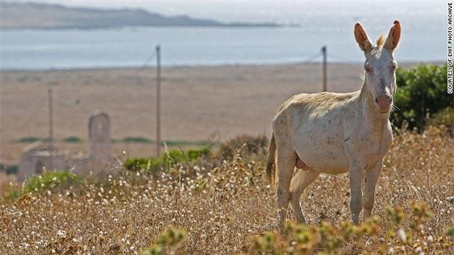 Đảo Asinara ở ngoài khơi bờ biển Sardinia  từng là một trại giam. Hiện nay, Asinara là nơi cư ngụ của hơn 650 loài động vật, gồm lừa bạch tạng. Du khách tới đảo có thể tham gia nhiều hoạt động như ngắm chim, câu cá, chèo thuyền, cưỡi ngựa…