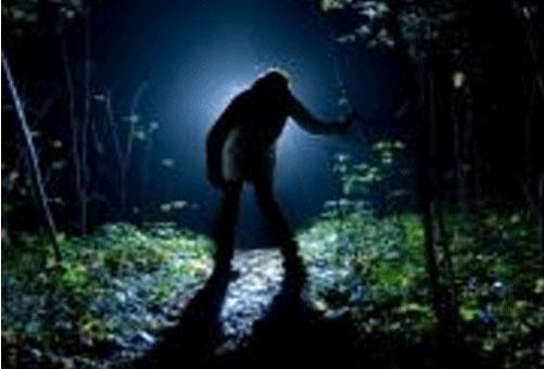 """Xuất hiện """"dã thú chân to"""" hái quả trong rừng"""
