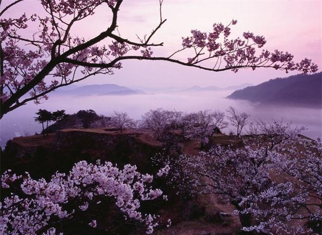 Trong khi mùa thu từ tháng 9 đến tháng 11 được cho là thời điểm tốt nhất để viếng thăm lâu đài trên mây. Vào mùa này, hoa anh đào bắt đầu nở, một màu hồng sáng tinh khôi ánh lên trên lâu đài, vẻ đẹp này còn tượng trưng cho cuộc sống và sức mạnh của các chiến binh samurai.