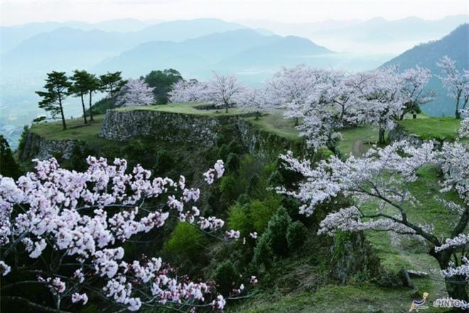 Một số người không chỉ thích đến lâu đài để ngắm nhìn tàn tích của nó trong mùa hoa anh đào rực rỡ mà còn muốn đắm mình trong những đám mây bông bềnh, bao phủ cả mặt đất trôi nhè nhẹ tạo cảm giác ảo như bước vào cõi tiên.