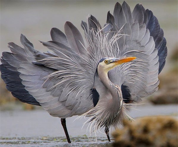 Đây là loài chim có thể nuốt chửng cá sấu và những bữa ăn vô cùng kinh dị của chúng - Ảnh 2.