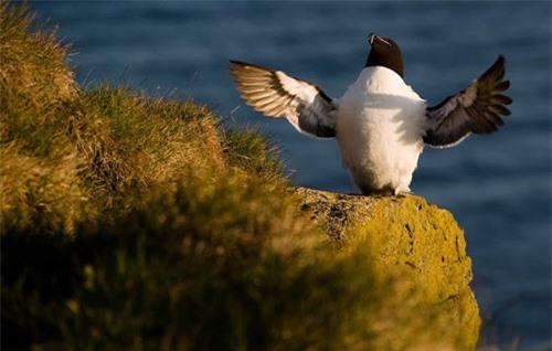 Đến Iceland làm bạn với chim biển - 10