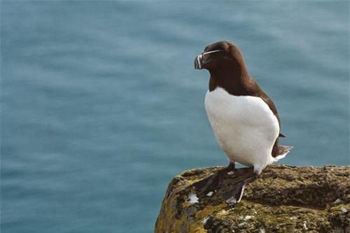 Đến Iceland làm bạn với chim biển - 2