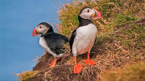 Đến Iceland làm bạn với chim biển - 3