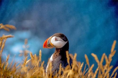Đến Iceland làm bạn với chim biển - 4