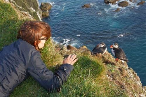 Đến Iceland làm bạn với chim biển - 5