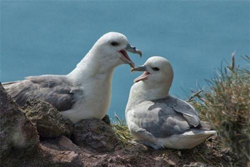 Đến Iceland làm bạn với chim biển - 6