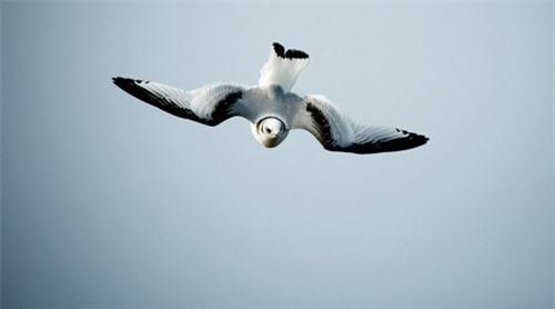 Đến Iceland làm bạn với chim biển - 9
