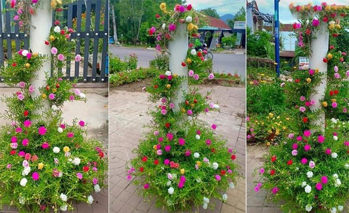Hoa mười giờ thì chẳng lạ gì, nhưng chỉ cần biến tấu một chút đảm bảo góc vườn của bạn sẽ vô cùng độc đáo, ai nhìn cũng mê! - Ảnh 7.