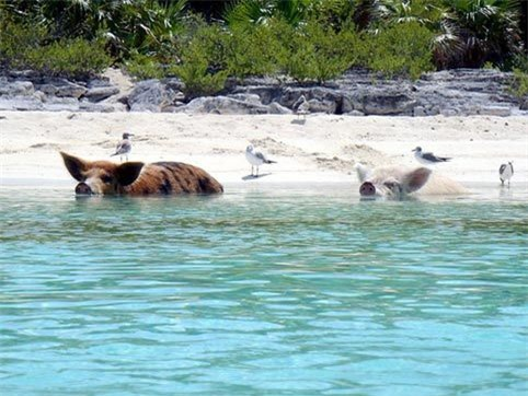 Những hòn đảo thiên đường của động vật