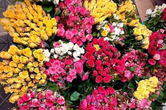 Hoa hồng dịp 8/3 tăng giá gấp 5, dân buôn tranh mua nhà vườn 'cháy hàng'